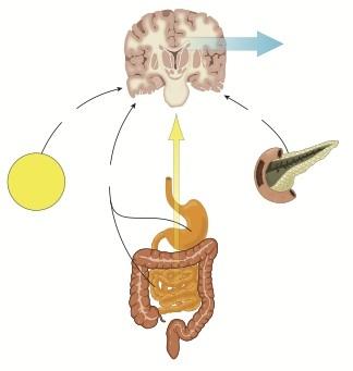 脳と腸の関係